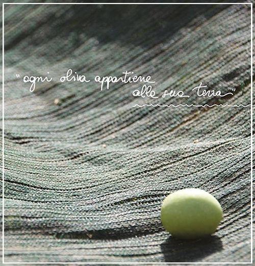 particolare oliva - Azienda Agricola Oliva